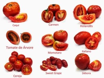 tomate tipos